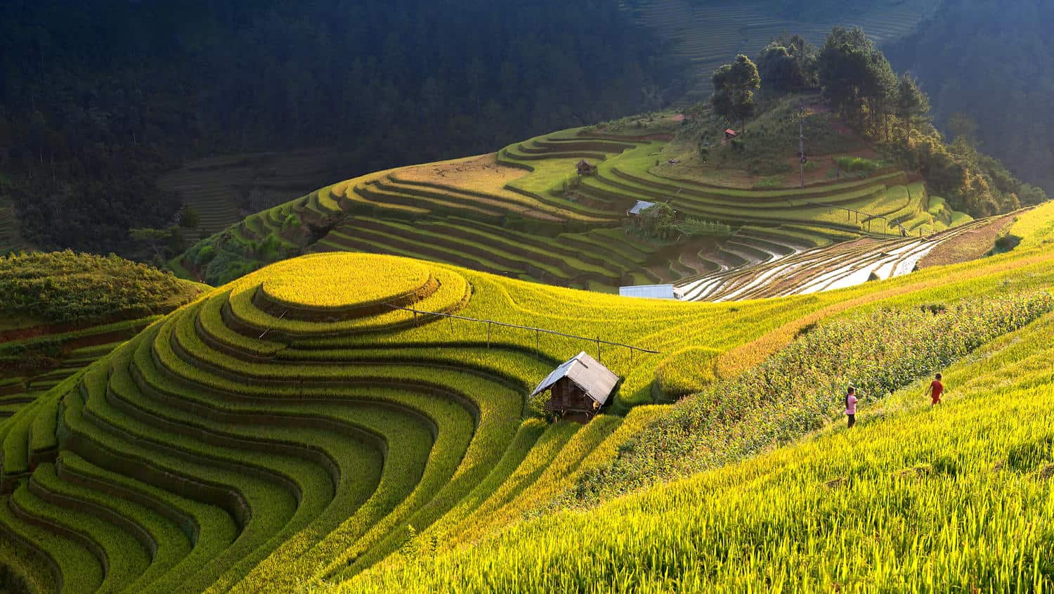 Beautiful Stairs Mu Cang Chai Rice Terraces In Vietnam Placeaholic