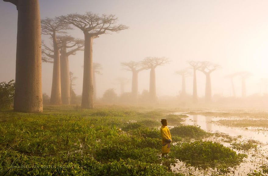 Mother of the Forest, Madagascar