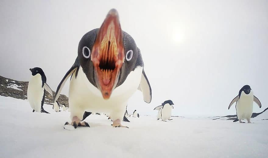 When Penguins Attack, Antarctica