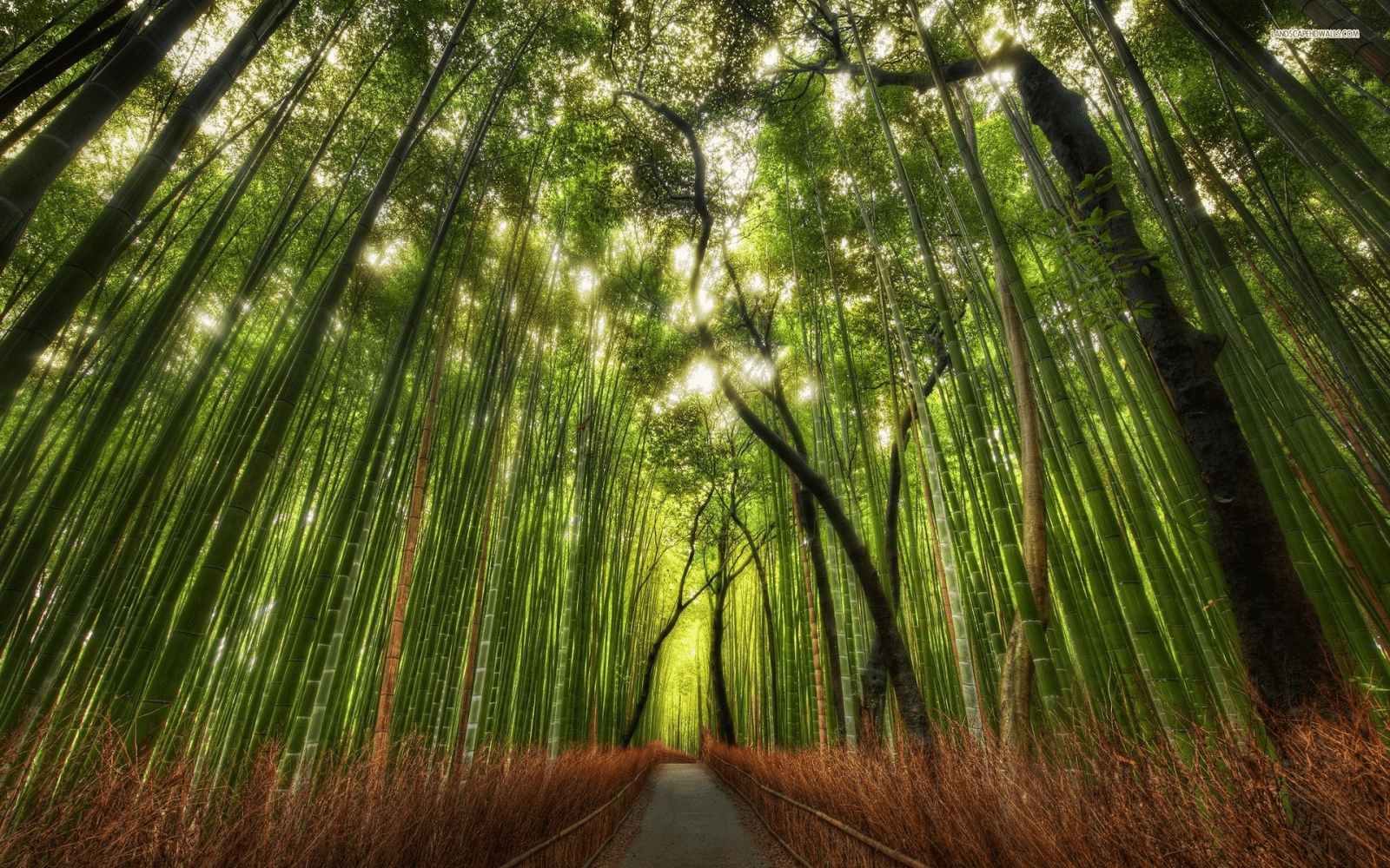 Bamboo Path, Kyoto, Japan