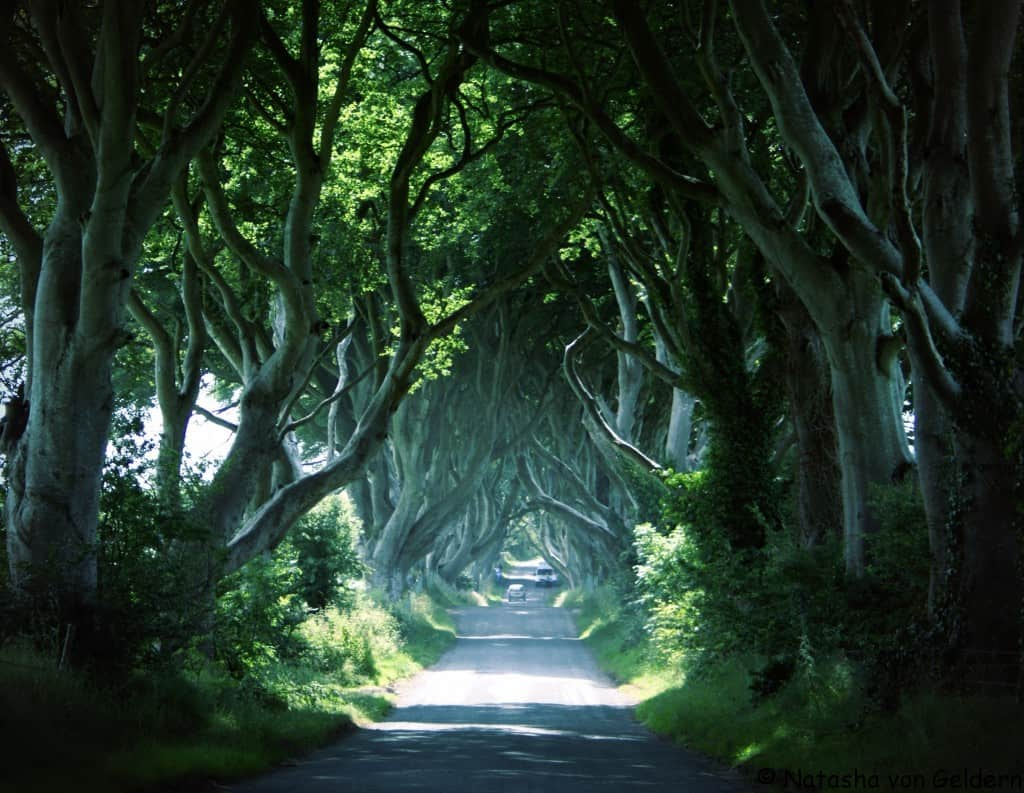 Do not visit the Dark Hedges during Winter! Go there during the summer to see for yourself this natural wander