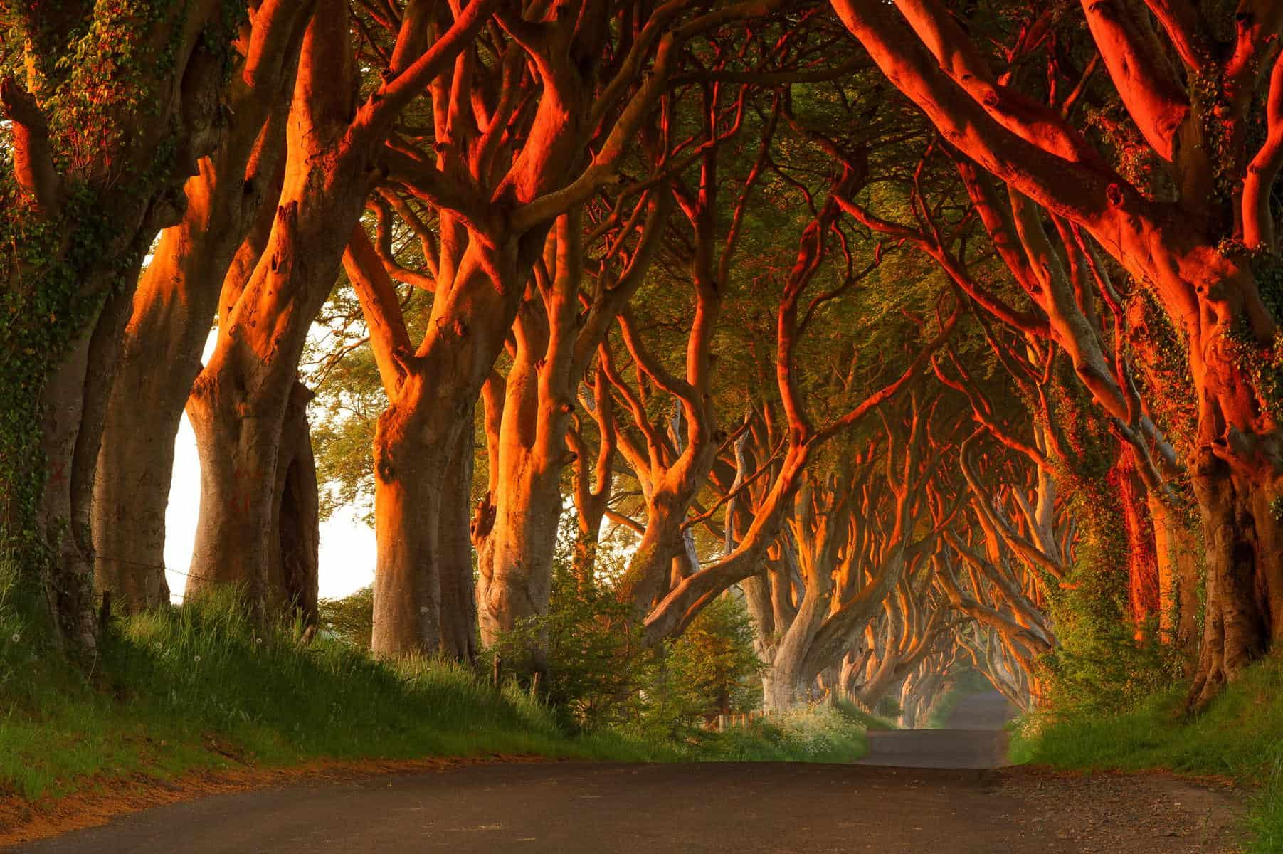 Dark Hedges address: Bregagh Rd, Ballymoney BT53 8TP, United Kingdom