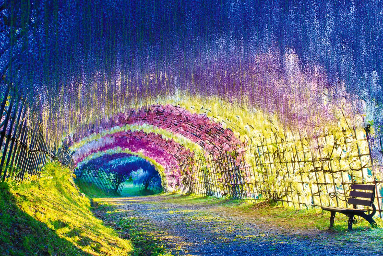 There were no special effects, no photoshop, no editing involved. Wisteria Tunnel