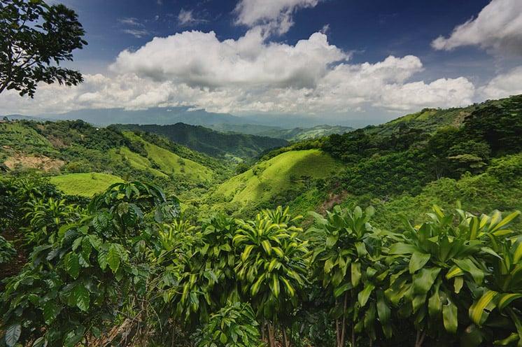 Jungle, Costa Rica