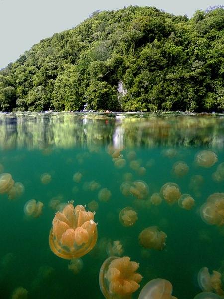 Jellyfish Lake, Republic of Palau