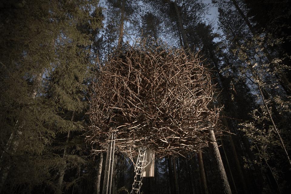 The Birds nest exterior