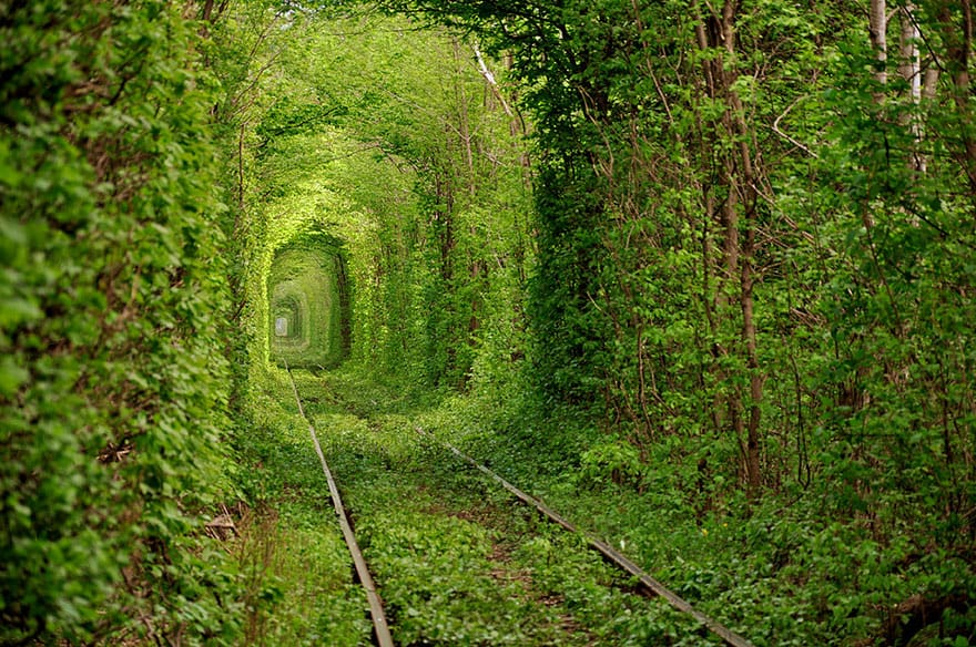 Tunnel of Love, Ukraine. The train still runs this track a couple of times a week.