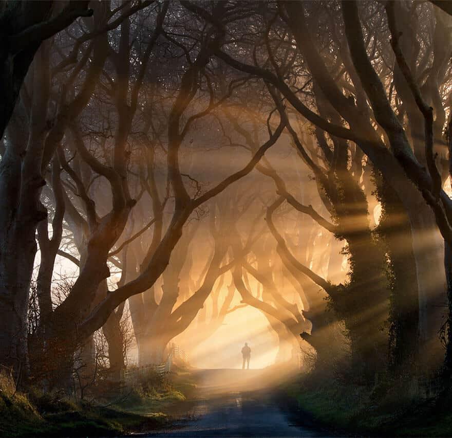 amazing tree tunnel