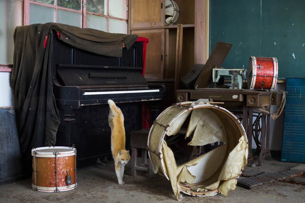 A cat jumps off a piano in the music room of a derelict school on Aoshima Island on February 25, 2015. # Thomas Peter/Reuters