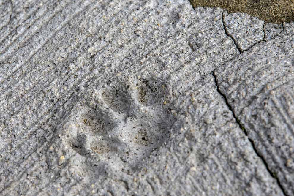 The print of a cat paw is embedded in concrete on Aoshima. Thomas Peter/Reuters