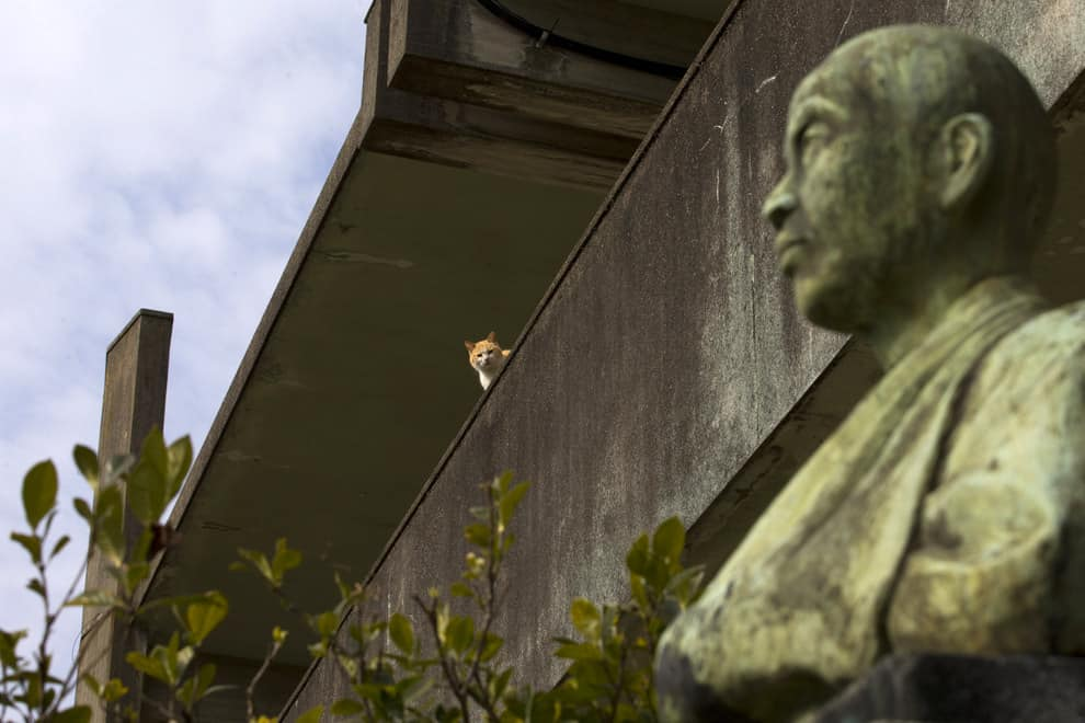 An Aoshima cat sits on a wall watching your every move.