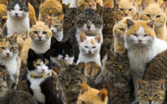 I bet you haven't see so many cats in one photo ever before!