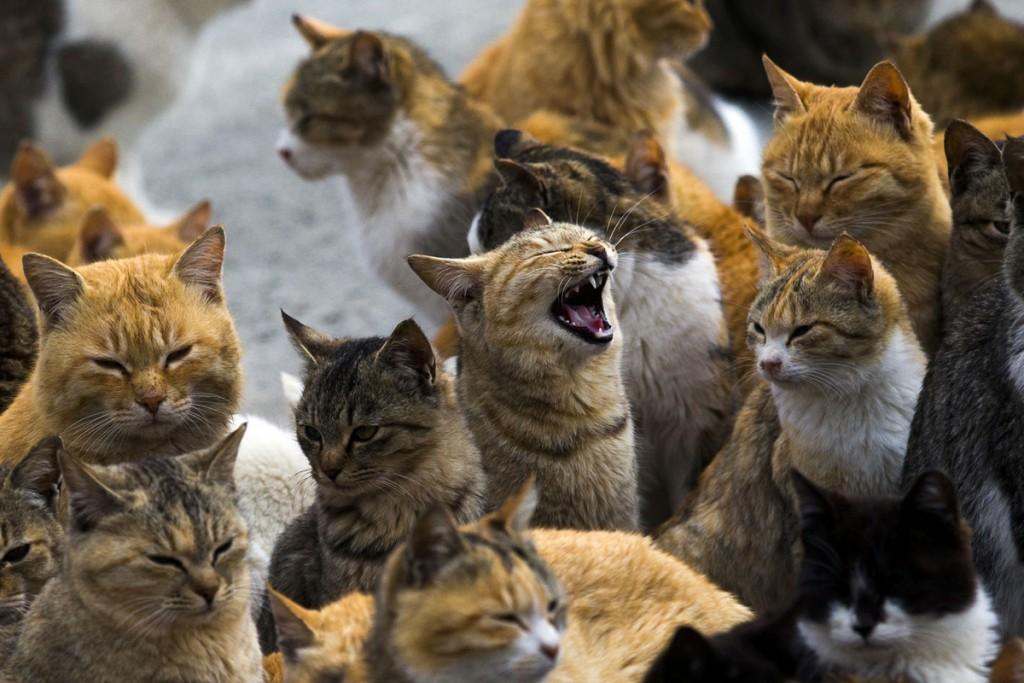 Cats crowd the Aoshima Island harbor