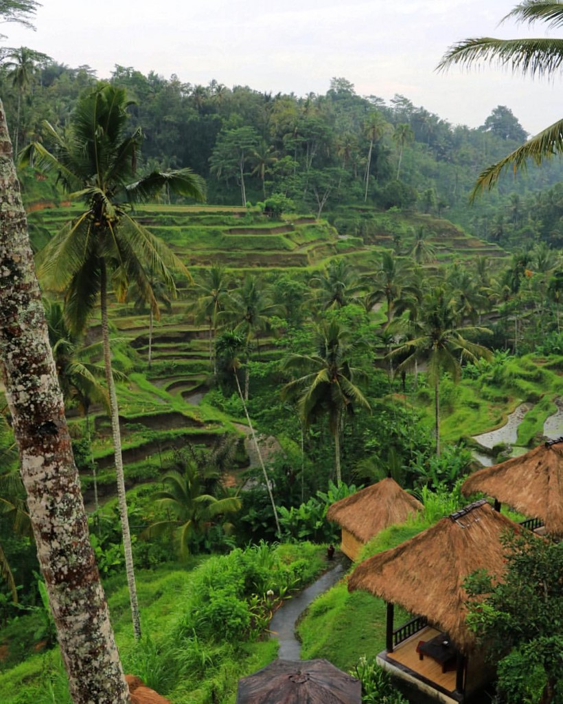 Tegalalang Rice Fields, Bali. Photo by Marco Tjokro