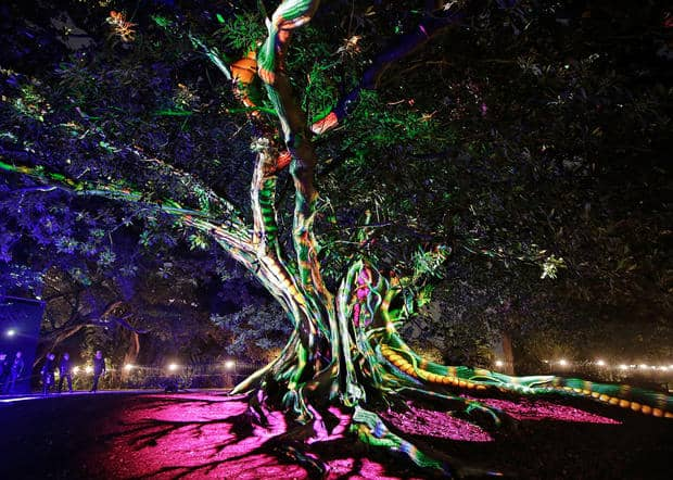SYDNEY, AUSTRALIA - MAY 25: A tree is illuminated during the 'Garden of Light' display at The Royal Botanic Gardens on May 25, 2016 in Sydney, Australia. Held annually, Vivid Sydney is the world's largest festival of light, music and ideas. (Photo by Brendon Thorne/Getty Images)