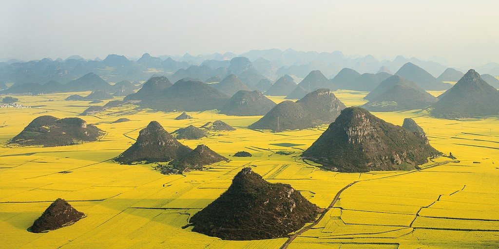 The golden sea of Canola Flowers in Luoping, Yunnan, China, during spring