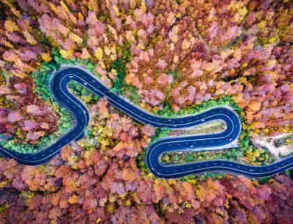 Road in Trasilvania. Bogata Forest, Romania (between Brasov and Sighisoara)